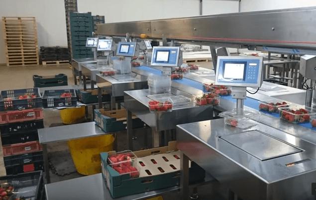 Bilance nell'industria alimentare