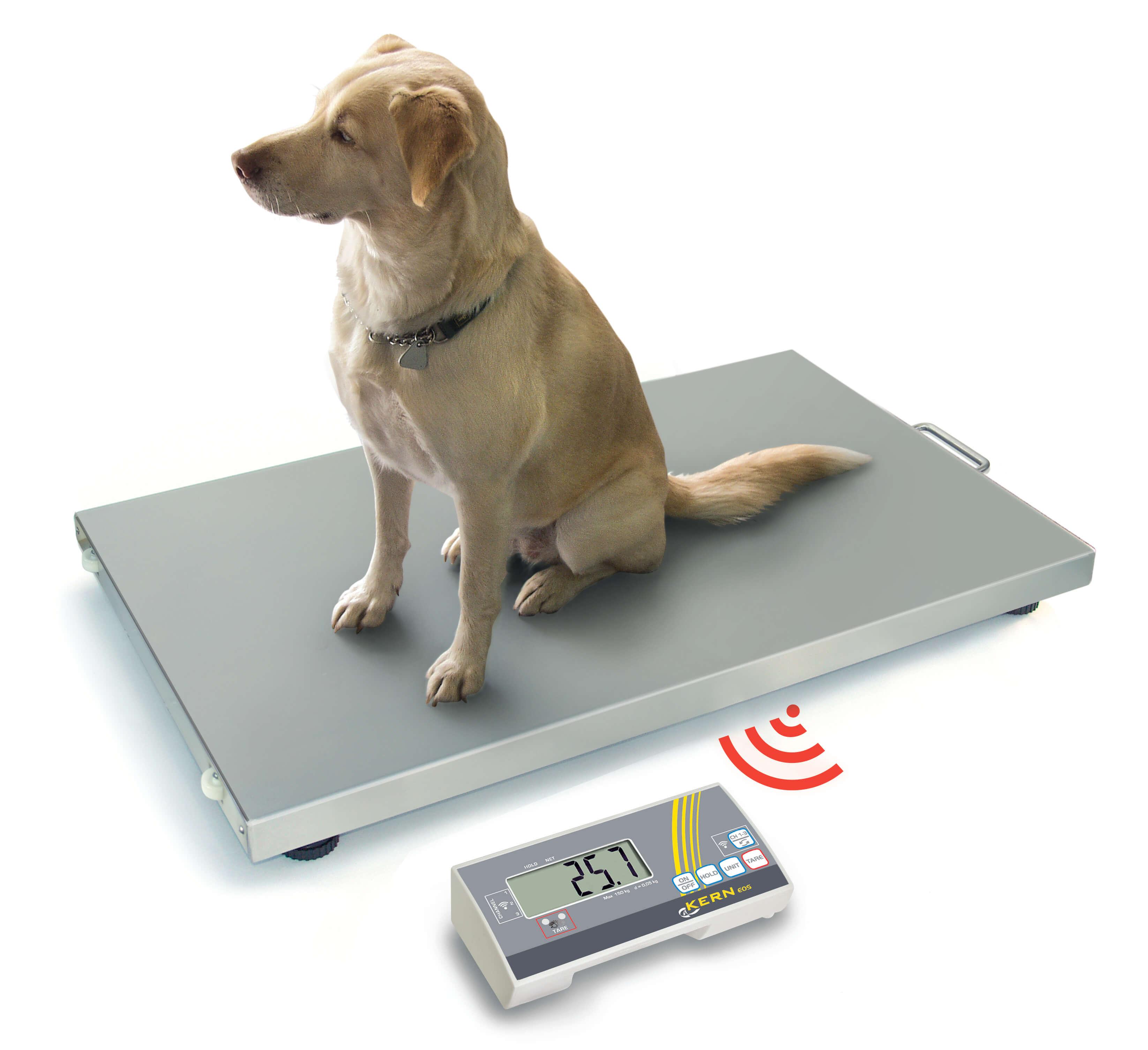 Bilancia per cani senza fili