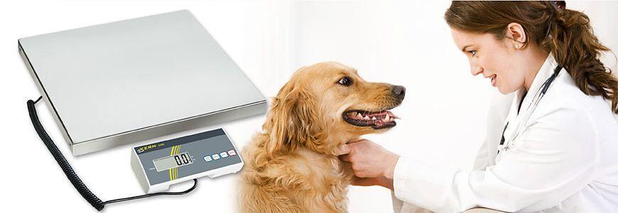 Bilance per veterinari